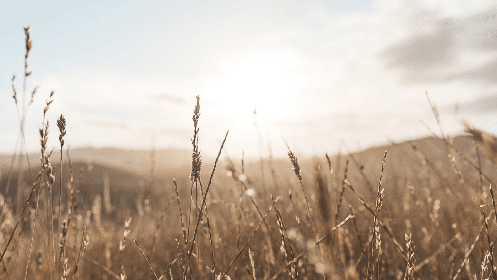 healing-quotes-for-the-weary-soul